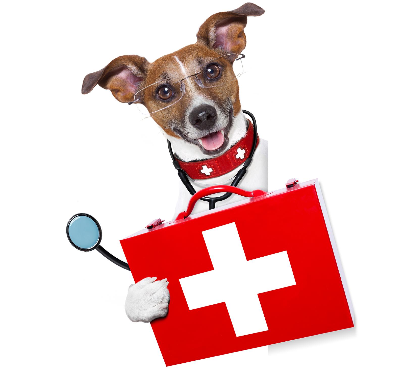 ¿ Por qué vacunar tu mascota ?
