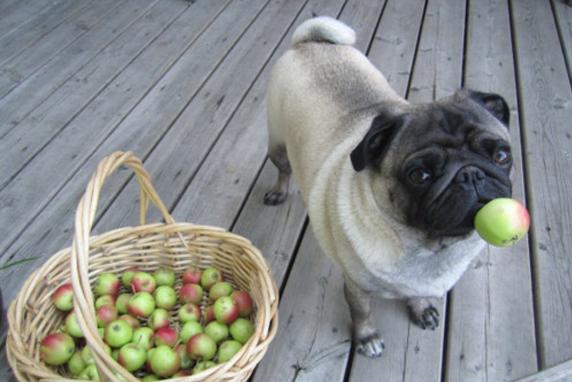 frutas y verduras saludables para tu peludito