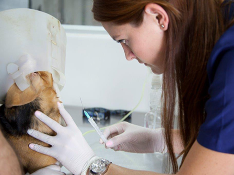 ayudas-diagnosticas-veterina-medellin-evi