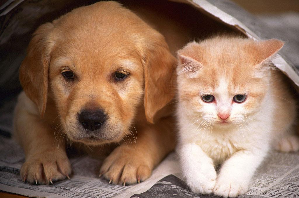 proyecto-de-ley-contra-el-maltrato-animal