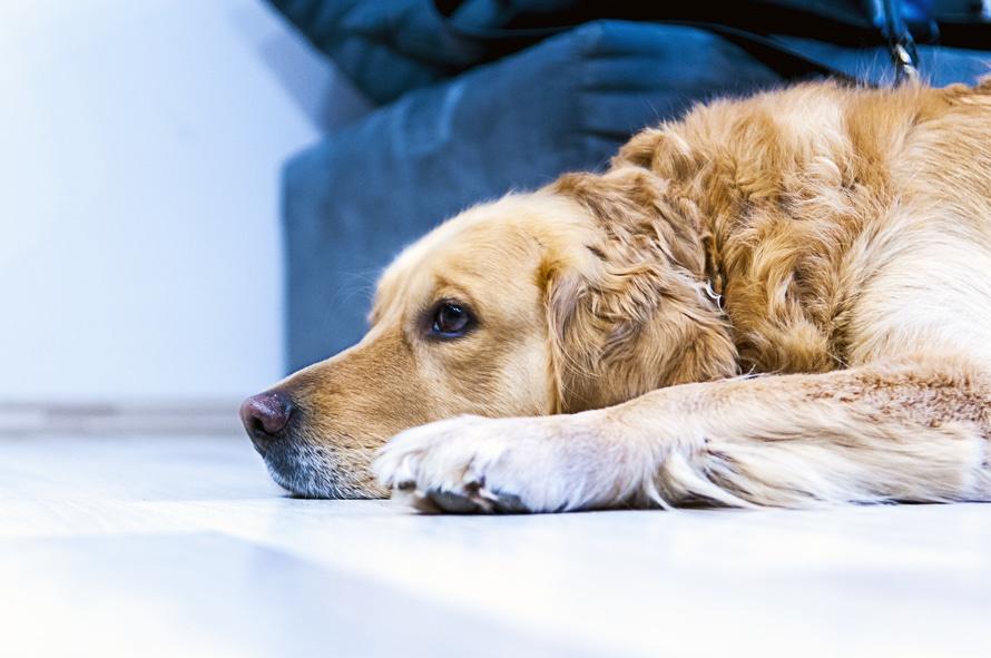 alergias-mascotas-perros