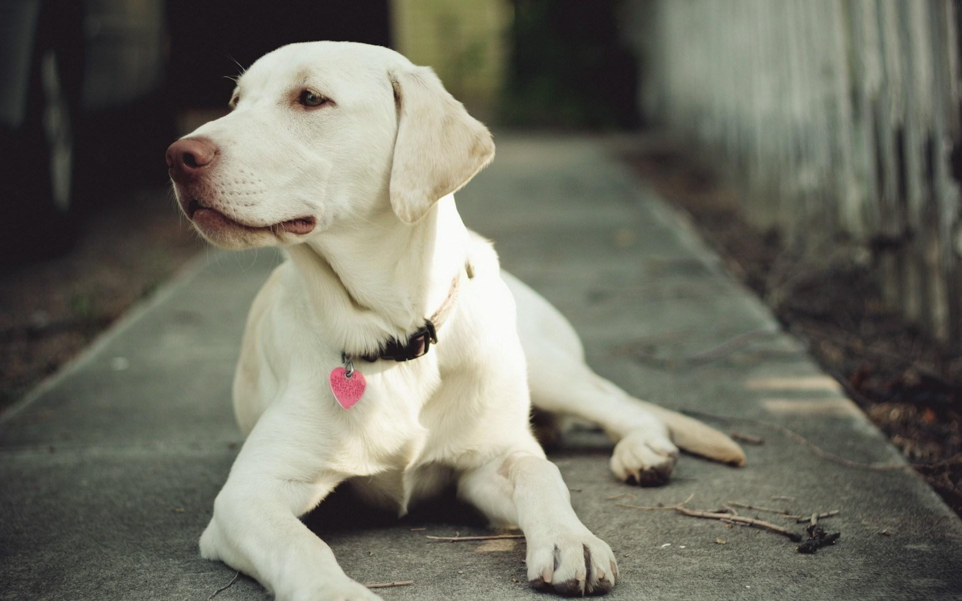 perro-adulto-desparasitacion-evi