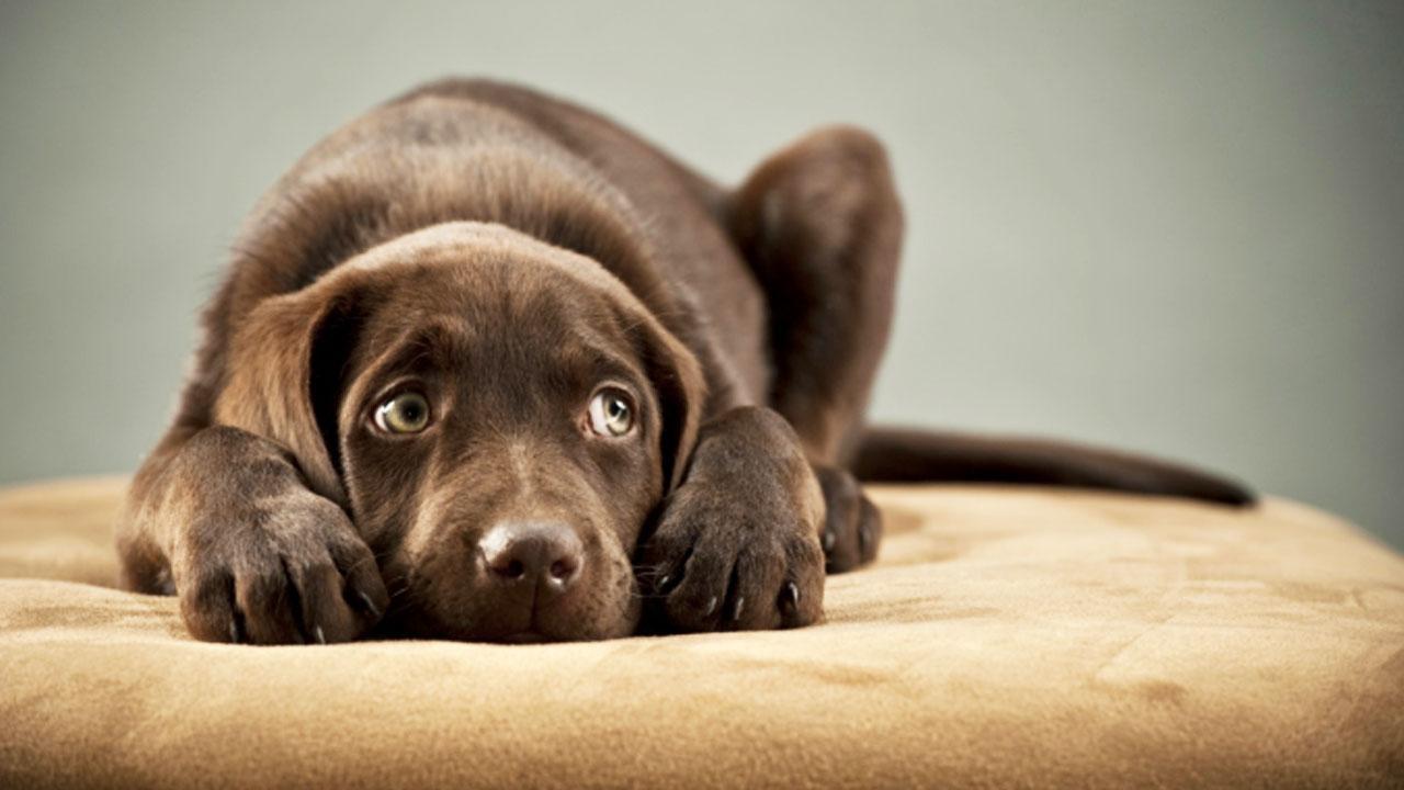 miedo-al-veterinario