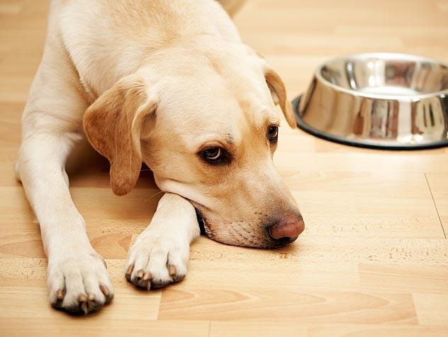 causas-tiroides-perros