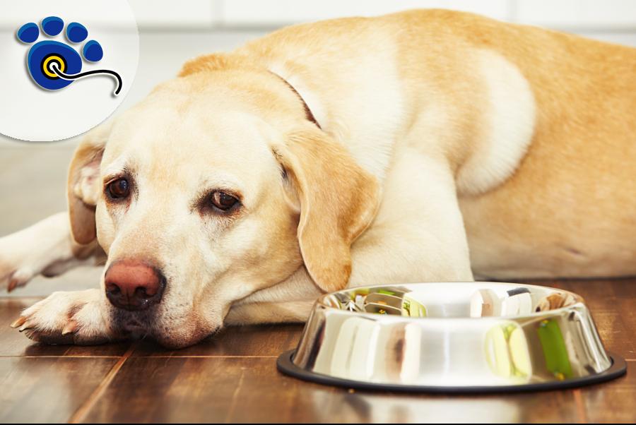 mi-perro-no-quiere-comer